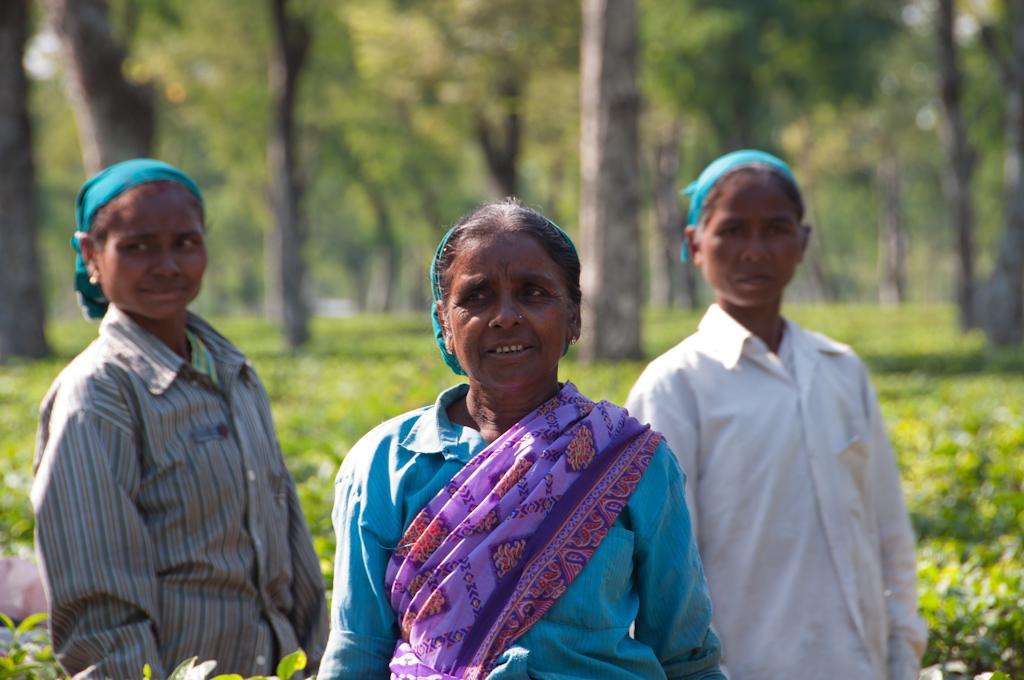 Tres dones als camps de te