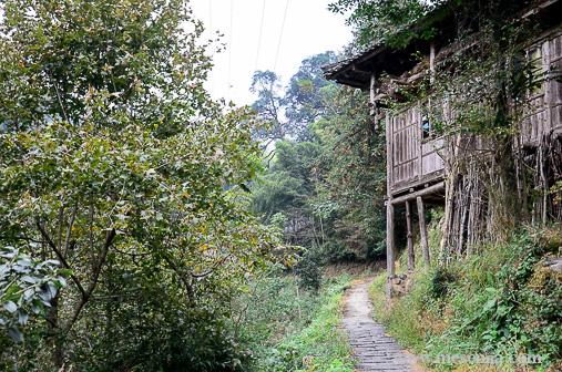 Terrasses d'arròs a Dazhai